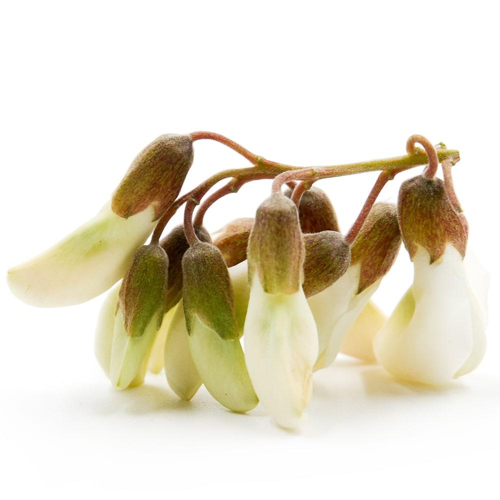 Sophora Japonica Extract (Rutin)