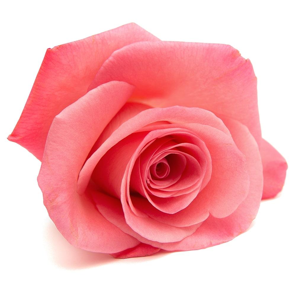 Organic Rose Petal
